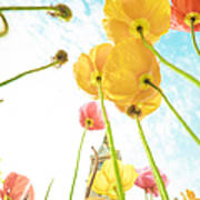 Flower In Sky Poster