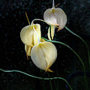 Flowerography Poster