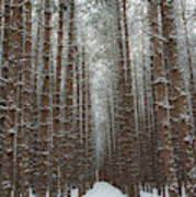 Forest In Sleeping Bear Dunes In January Poster