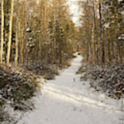 Forest Track In Winter Poster