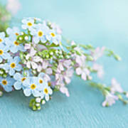 Forget Me Not And Wild Thyme Flowers Poster