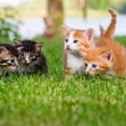 Four Little Kittens Playing In Garden Poster