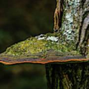 Fungi 4648 Poster