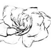 Gardenia Paint My Sketch Poster