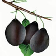 German Prunes Fruit Vintage Art Poster