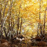 Golden Autumn Light Poster