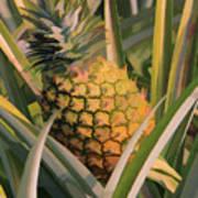 Golden Pineapple Poster