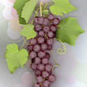 Grapes on Grapes Poster