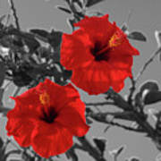 Hibiscus Selective Color Poster