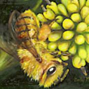 Honey Bee On Wild Golden Glow Poster