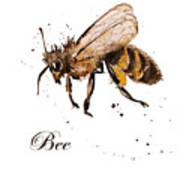Honey Bee Watercolor Isolation Poster