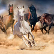 Horse Herd Run In Desert Sand Storm Poster