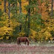 Horse In Fall Poster