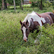 Horse Print 578 Poster