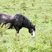 Horse Print 828 Poster