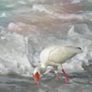 Ibis And A Tinted Sea Poster
