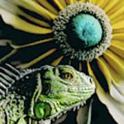 Iguana And Sunflower Poster