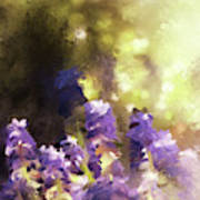 Impressions Of Muscari Poster