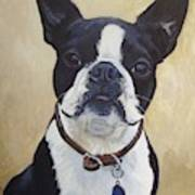 Joey the Boston Terrier Poster