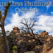 Joshua Tree National Park, California Box Canyon 02 Poster