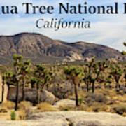Joshua Tree National Park Valley, California Poster