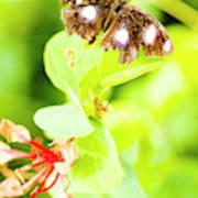 Jungle Bug Poster