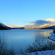 Kenai Lake Primrose Kenai Peninsula Alaska Poster
