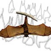 L Is For Little Red Flying Fox Poster