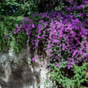Lavender Pot Poster