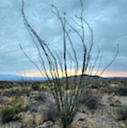 Lone Bush - Sunrise Poster