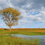 Lone Tree By A Wetland Poster