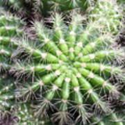 Macro Of Succulent Plant In The Desert Poster