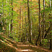 Meigs Creek Trailhead In Smoky Mountains National Park Poster