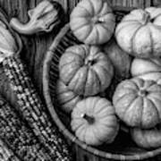 Mimi Pumpkins In Wicker Bowl Black And White Poster