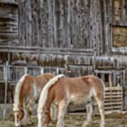Horses By The Barn Sugarbush Farm Poster