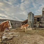 Morgan Horses Pomfret Vermont Poster