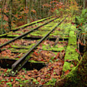Mossy Train Track In Fall Poster