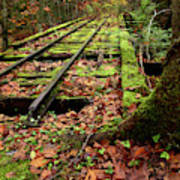 Mossy Train Tracks Poster