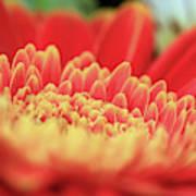 Mum Flower Poster