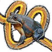 N Is For Northern Banjo Frog Poster