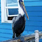 Oceanside Pelican Right  Poster