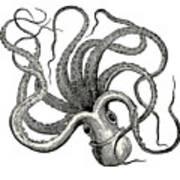 Octopus Octopus Vulgaris - Vintage Poster