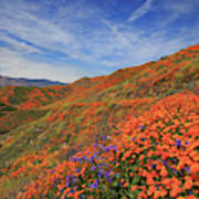 Oodles Of Poppies Fill The Walker Canyon Of Lake Elsinore, Calif Poster