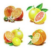 Orange Grapefruit Lemon Watercolor Fruit Illustration Poster