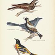 Order Passeriformes Poster