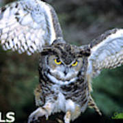 Owls Mascot 2 Poster