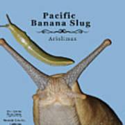 Pacific Banana Slug Poster