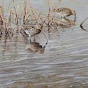 Pair Of Snipe By Alan M Hunt Poster
