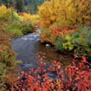 Palisades Creek Canyon Autumn Poster