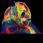 Panda Little Bear Australia Animal Color Designed Poster